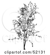 Royalty Free RF Clipart Illustration Of A Black Tree Silhouette Version 4