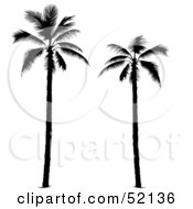 Royalty Free RF Clipart Illustration Of Two Tall Palm Tree Silhouettes