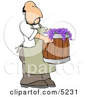 Man Harvesting Wine Grapes Clipart