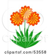 Royalty Free RF Clipart Illustration Of Three Orange And Yellow Spiral Daisy Flowers With Green Leaves