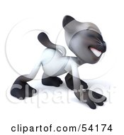 3d Siamese Pussy Cat Character Walking On All Fours Pose 3