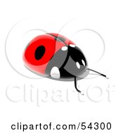 Royalty Free RF Clipart Illustration Of A 3d Shiny Ladybird Pose 1