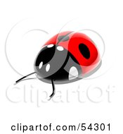 Royalty Free RF Clipart Illustration Of A 3d Shiny Ladybird Pose 3