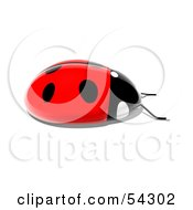 Royalty Free RF Clipart Illustration Of A 3d Shiny Ladybird Pose 4
