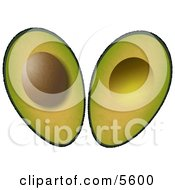 Sliced In Half Avocado Fruit with Seed