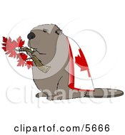 Canadian Beaver Holding Maple Tree Branch And Wearing Canada Flag Clipart Illustration