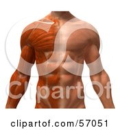 Royalty Free RF Clipart Illustration Of A 3d Closeup Of A Muscle Male Body Character Facing Front