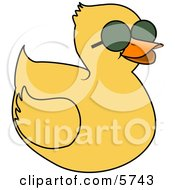 Yellow Duckling Wearing Dark Sunglasses On A Hot Sunny Day
