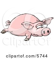 Big Fat Pig Laying On The Ground Clipart Illustration