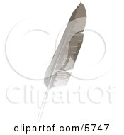 Gray And White Bird Feather Clipart Illustration