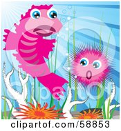 Two Pink Sea Creatures Above Corals And Anemones
