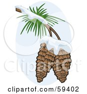 Royalty Free RF Clipart Illustration Of Two Pinecones Flocked In Snow On The Branch Of A Tree by r formidable
