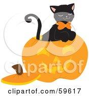 Black Cat Sitting Inside A Carved Halloween Pumpkin