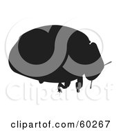 Ladybug Silhouette In Black