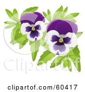 Royalty Free RF Clipart Illustration Of A Pair Of Purple And White Pansy Flowers
