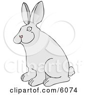 Pet Rabbit With Big Ears Clipart Picture
