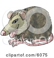 Happy Possum Clipart Picture