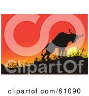 Royalty Free RF Clipart Illustration Of A Silhouetted Bull Climbing A Hill Against An Orange Sunset