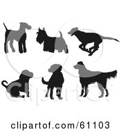 Royalty Free RF Clipart Illustration Of A Digital Collage Of Six Dark Brown Dog Silhouettes Terriers Greyhound Hound Labrador Golden Retriever by pauloribau