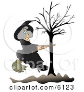 Warty Witch In Black Sitting On A Broom That Is Stuck In A Bare Tree Clipart