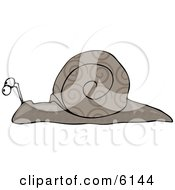 Gray Snail With Swirly Designs On Its Shell