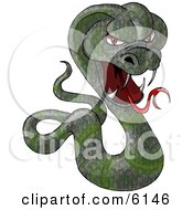 Green Cobra Snake Baring Its Fangs And Forked Tongue