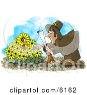 Wild Turkey In A Yellow Daisy Patch Hiding From A Pilgrim With A Gun Clipart Picture