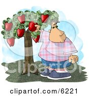 Chubby Boy Picking A Red Apple From An Apple Tree In An Orchard Clipart Picture