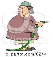 Woman In A Robe With Hair In Curlers Using A Garden Hose To Water Clipart Picture