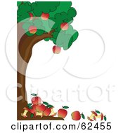 Healthy Apple Tree Boder With Apples And Cores On The Ground