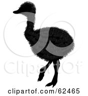Royalty Free RF Clipart Illustration Of A Furry Silhouetted Baby Ostrich Bird