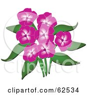 Royalty Free RF Clipart Illustration Of A Beautiful Pink Phlox Flowers And Green Leaves by Pams Clipart