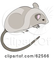 Royalty Free RF Clipart Illustration Of A Cute Gray Mouse With A Long Tail And Whiskers