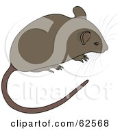 Royalty Free RF Clipart Illustration Of A Cute Brown Mouse With A Long Tail And Whiskers by Pams Clipart