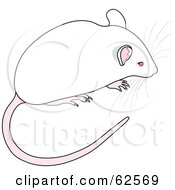 Royalty Free RF Clipart Illustration Of A Cute White Mouse With A Long Tail And Whiskers by Pams Clipart