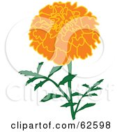 Royalty Free RF Clipart Illustration Of A Pretty Orange Marigold Flower