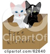 Royalty Free RF Clipart Illustration Of Two Cute Baby Kitties In A Free Kittens Box by Pams Clipart