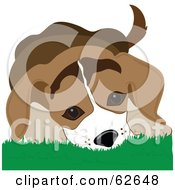 Royalty Free RF Clipart Illustration Of A Cute Beagle Puppy In Grass by Pams Clipart