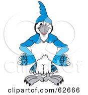 Blue Jay Character School Mascot Standing With His Hands On His Hips