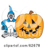 Blue Jay Character School Mascot With A Halloween Pumpkin