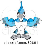 Royalty Free RF Clipart Illustration Of A Blue Jay Character School Mascot With Big Muscles