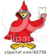 Royalty Free RF Clipart Illustration Of A Red Cardinal Character School Mascot Holding A Tooth