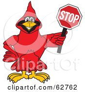 Royalty Free RF Clipart Illustration Of A Red Cardinal Character School Mascot Holding A Stop Sign