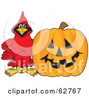 Royalty Free RF Clipart Illustration Of A Red Cardinal Character School Mascot With A Halloween Pumpkin by Toons4Biz