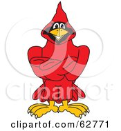 Royalty Free RF Clipart Illustration Of A Red Cardinal Character School Mascot With Crossed Arms by Toons4Biz