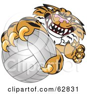 Royalty Free RF Clipart Illustration Of A Tiger Character School Mascot Grabbing A Volleyball by Toons4Biz
