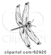 Royalty Free RF Clipart Illustration Of A Black And White Dragonfly In Flight