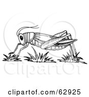 Royalty Free RF Clipart Illustration Of A Black And White Grasshopper In Profile Over Grass by LoopyLand