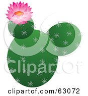 Royalty Free RF Clipart Illustration Of A Blooming Pink Flower On A Prickly Cactus Plant by Rosie Piter