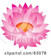 Royalty Free RF Clipart Illustration Of A Beautiful Pink Blooming Cactus Flower by Rosie Piter